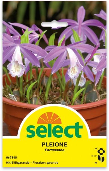 Orchidee de jardins