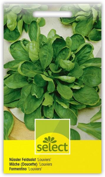 Nüssler Feldsalat 'Louviers' - Valerianella locusta L.