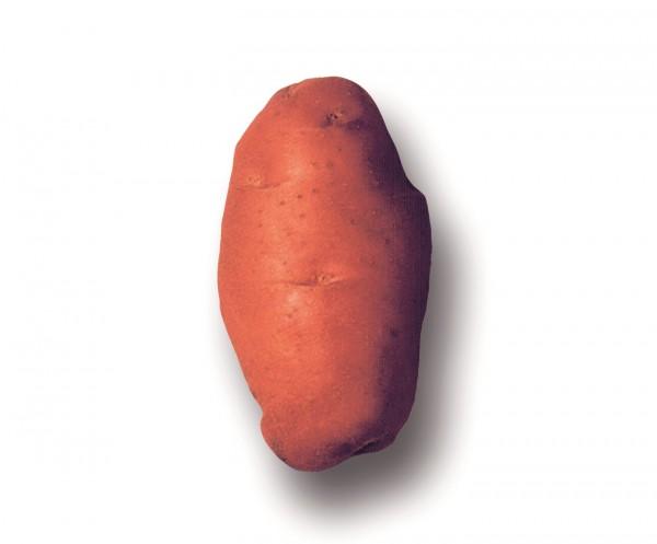 Bio Plants de pommes-de-terre 'Désirée', 1 kg