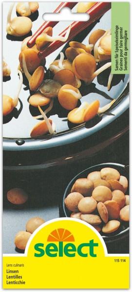 Graines germées Lentilles