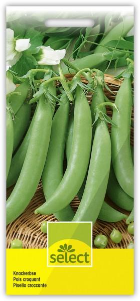 Knackerbse - Pisum sativum