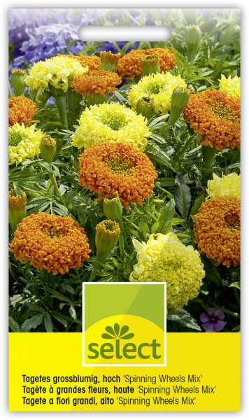 Tagetes grossblumig, hoch 'Spinning Wheels Mix' - Tagetes erecta