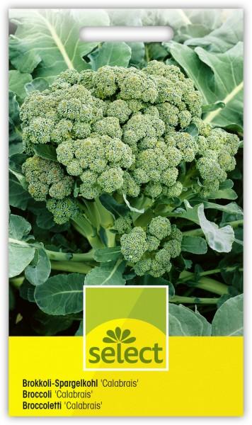 Brokkoli-Spargelkohl 'Calabrais' - Brassica oleracea var. italica