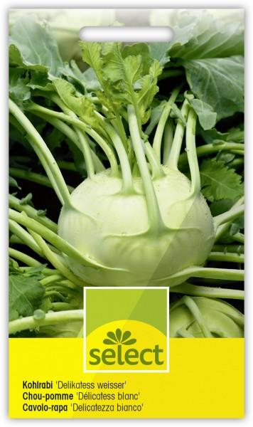 Kohlrabi 'Delikatess weisser' - Brassica oleracea L. var. gongylodes L.