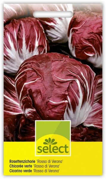 Rosettenzichorie 'Rossa di Verona' - Cichorium intybus L. var. foliosum Hegi