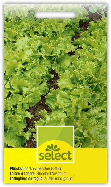 Pflücksalat 'Australischer Gelber' - Vorderseite