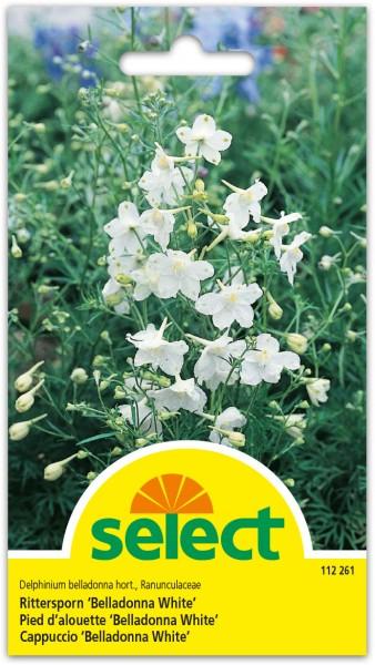 Rittersporn 'Belladonna White'
