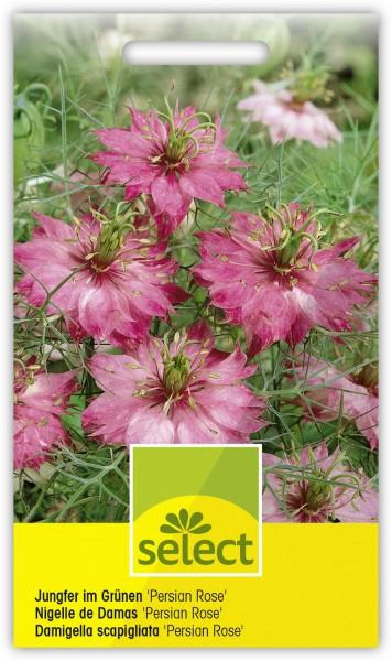 Nigella Jungfer im Grünen Persian rose - Vorderseite