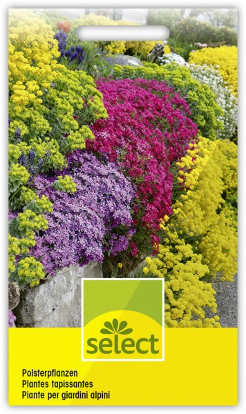 Polsterpflanzenmischung - Vorderseite