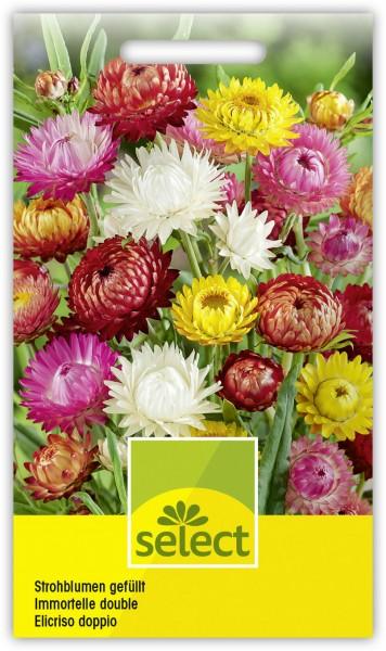 Strohblumen Mischung - Vorderseite