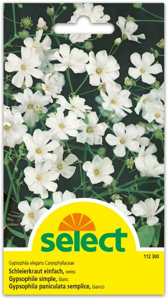 Gypsophile simple, blanc