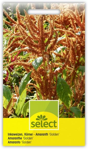 Inkaweizen, Körner - Amaranth 'Golden' - Amaranth hypochondriacus
