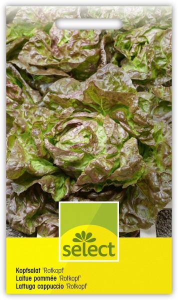 Kopfsalat 'Rotkopf' - Lactuca sativa var. capitata