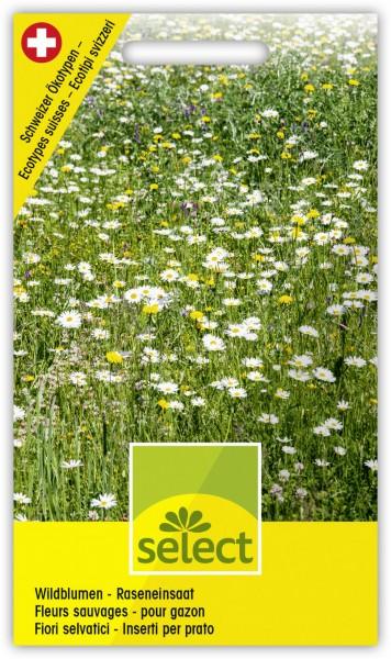 Wildblumen - Raseneinsaat - Vorderseite
