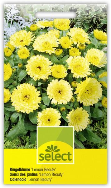 Ringelblume 'Lemon Beauty', zitronengelb - Vorderseite
