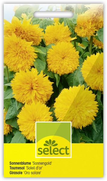 Sonnenblume 'Sonnengold' - Helianthus annuus