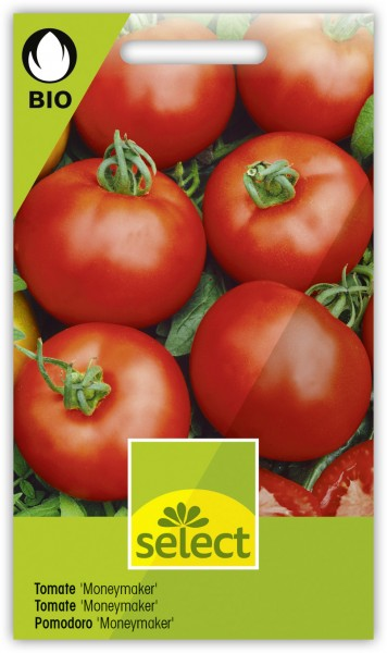 Tomate 'Moneymaker' - Lycopersicon esculentum