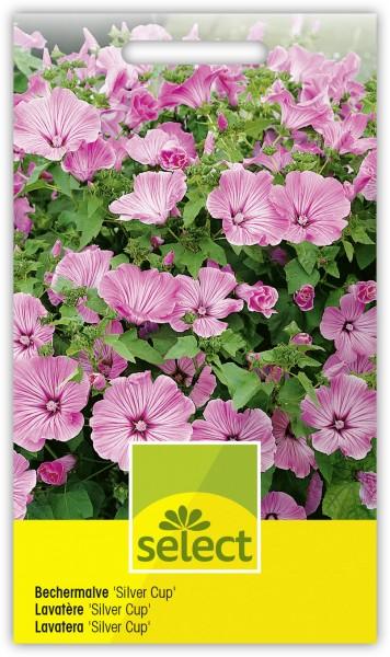 Bechermalve 'Silver Cup' - Lavatera trimestris