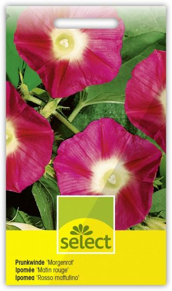 Prunkwinde 'Morgenrot' - Ipomoea tricolor