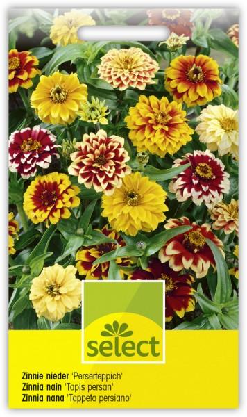 Zinnie nieder 'Perserteppich' - Zinnia angustifolia
