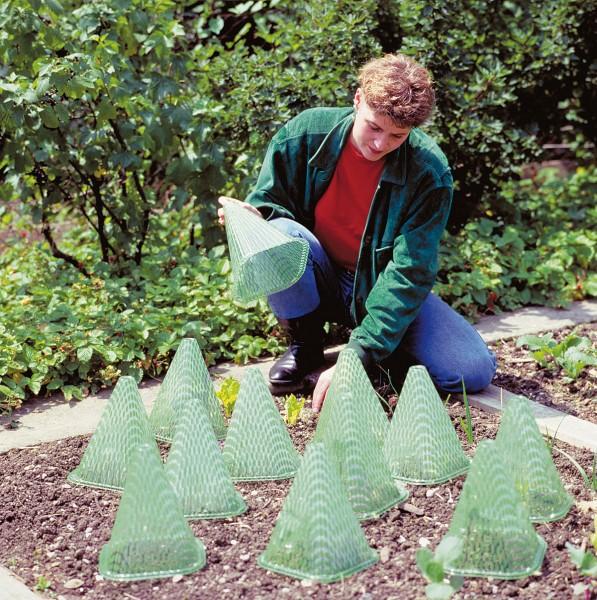 Sunnyboy Pflanzenhut (10 Stk.)