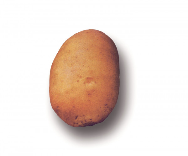 Saatkartoffeln 'Agata', 2.5 kg