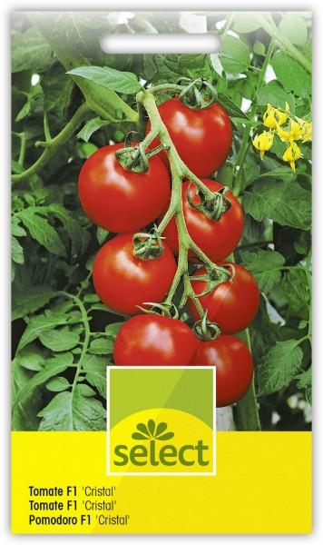 Tomate F1 'Cristal' - Lycopersicon esculentum
