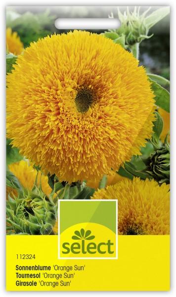 Tournesol soleil 'Orange Sun', double