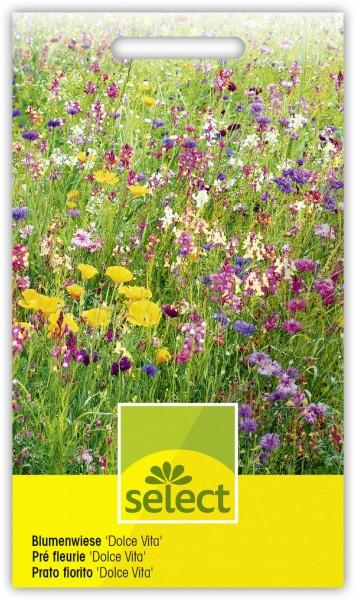 Blumenwiese 'Dolce Vita' - Vorderseite