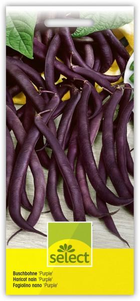 Buschbohne 'Purple Duke' - Vorderseite