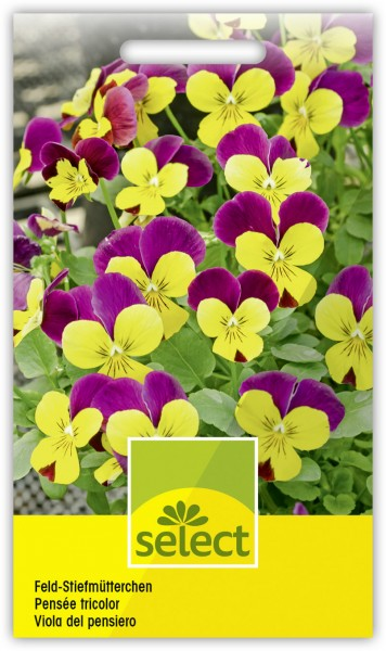 Feld-Stiefmütterchen - Viola tricolor
