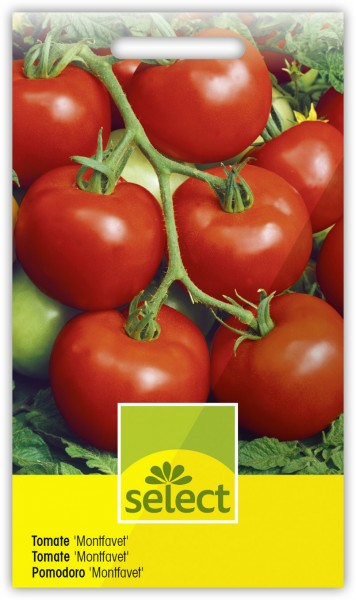Tomate 'Montfavet' - Lycopersicon esculentum