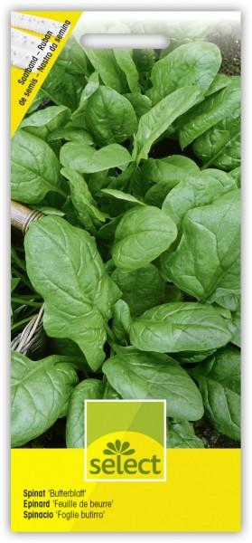 Spinat 'Butterblatt' Frühjahr und Herbst (Saatband) - Vorderseite