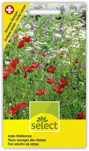 Acker-Wildblumen - Vorderseite