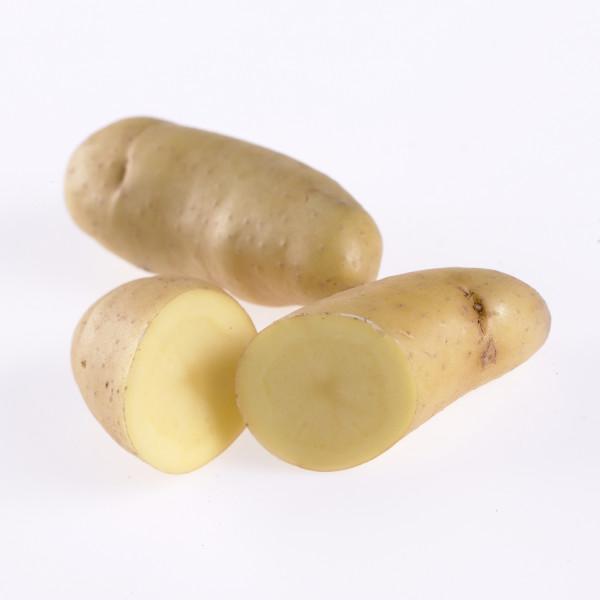 Saatkartoffeln 'Ratte', 1 kg