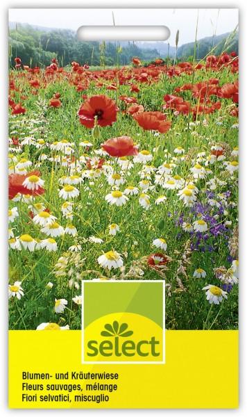 Blumen- und Kräuterwiese - Vorderseite