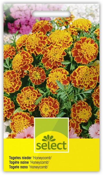 Niedere Sammetblume 'Honeycomb' - Vorderseite
