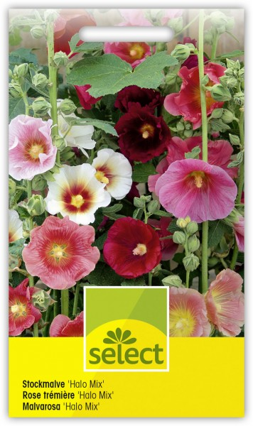 Stockmalve 'Halo Mix' - Alcea rosea