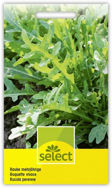 Rauke mehrjährige - Diplotaxis tenuifolia