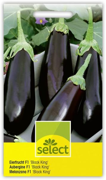 Eierfrucht, Aubergine 'Black King F1' - Vorderseite