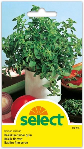 Basilikum, feiner, grün