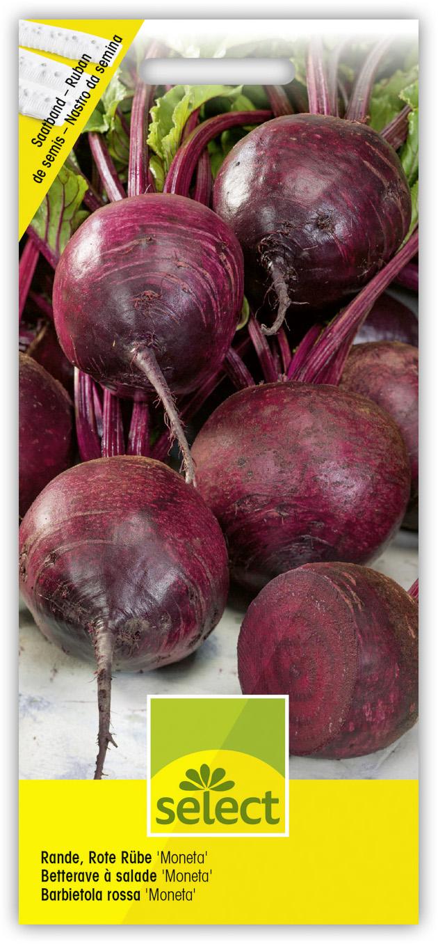 grain Fino pour env 70 plantes graines semences légumes semis Tubercules Fenouil