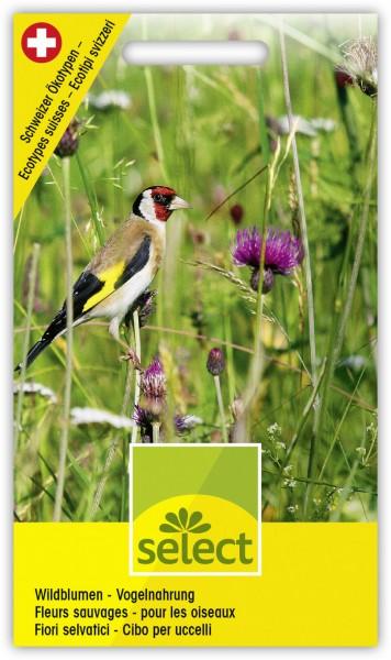 Wildblumen - Vogelnahrung - Vorderseite