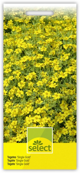 Tagetes 'Single Gold' - Vorderseite