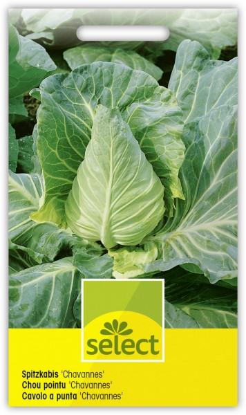 Spitzkabis 'Chavannes' - Brassica oleracea L. var. capitata