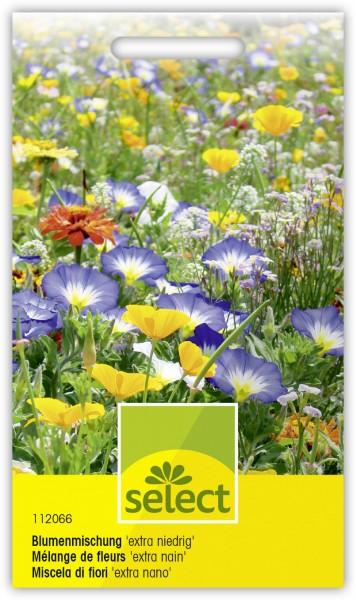 Mélange de fleurs extra nain