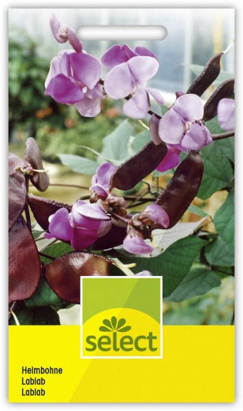 Helmbohne - Lablab purpureus
