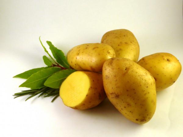 Plants de pommes-de-terre 'Agria', 2.5 kg