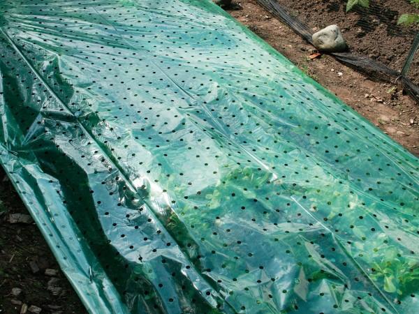 Film pour plantes vert