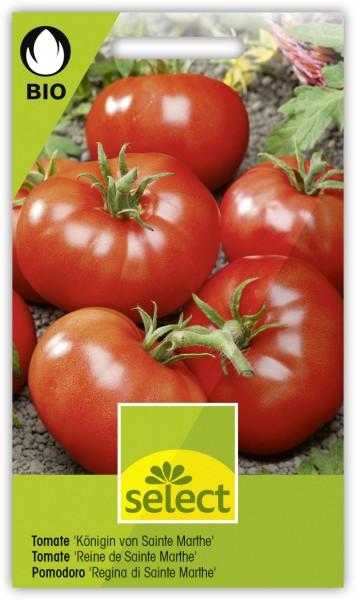 Tomate 'Königin von Sainte Marthe' - Lycopersicon esculentum